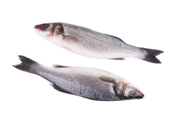 Close up of two fresh seabass fish.