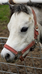 A pony behind the fence...