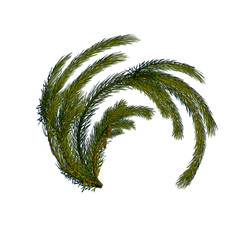 curved pine branch
