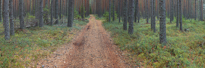 autumn landscape in the spruce forest