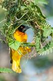 Weaver iside incomplete nest poster