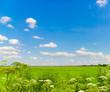 Farm Horizon Field