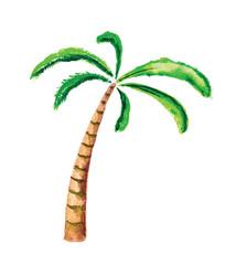 Palm tree, watercolour vector illustration