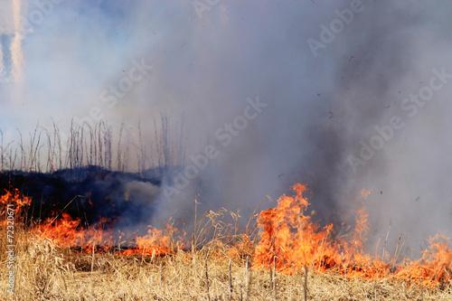 fire burning dry grass