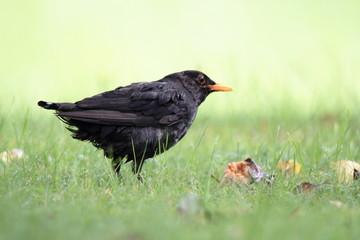 Wunderschöner wilder seltener Vogel