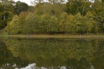 Série d'arbres le long de l'eau en automne