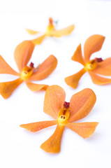 orange orchid isolated on white