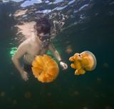 Man snorkeling in Jellyfish lake, Palau