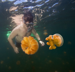 Man snorkeling in Jellyfish lake, Palau