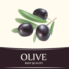Vector decorative olive branch.For label, pack.
