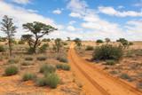Kalahari tracks