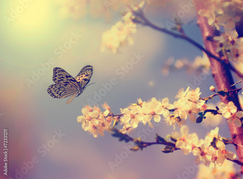 Deurstickers Vlinder Butterfly and cherry blossom