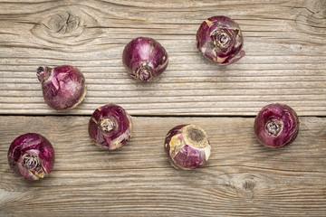 hyacinth bulbs abstract