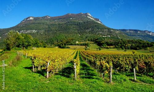 Papiers peints Alpes vignoble de jongieux-savoie