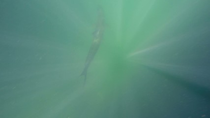 Tarpon gopro 4 video