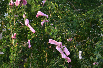 fortune-telling paper or Seam-si tie at tree