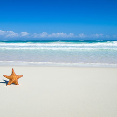 starfish over beach