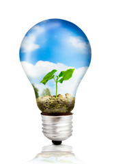 Eco bulb with green plant