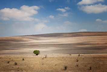 Lonely tree in a field under a blue sky