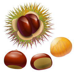 chestnuts illustration