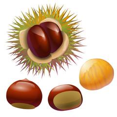chestnuts illustration