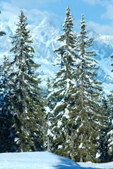 Winter mountain fir forest landscape