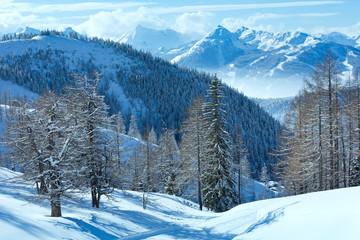 Winter forest near Dachstein mountain massif