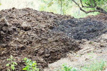 pile of horse manure on backyard