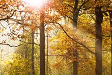 Soleil poutres travers feuillage à l'automne