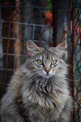 Gatto persiano ritratto