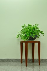 A Decorative Plant on Wooden Table