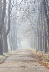 Misty morning in old park