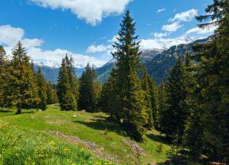 Alpine view with yellow dandelion flowers