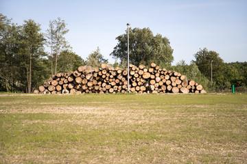 Holz *** Baumstämme-1