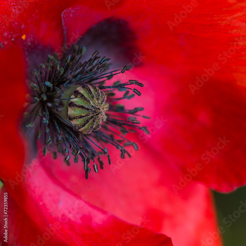 Poppy Secrets © bigemrg