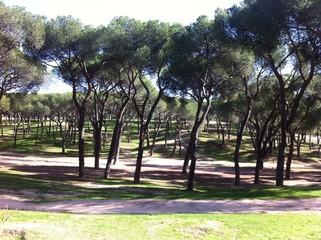 bosque de la dehesa