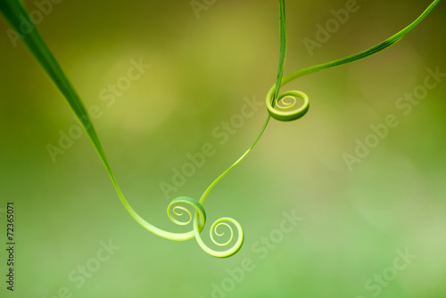 Leinwanddruck Bild Abstract leaf spiral close-up