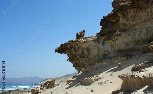 canvas print picture Fuerteventura 20