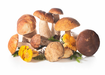 Fresh forest edible mushrooms on a white background.