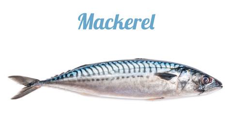 mackerel isolated