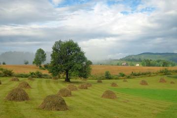 Misty Morning On A Rural Landscape, Montenegro