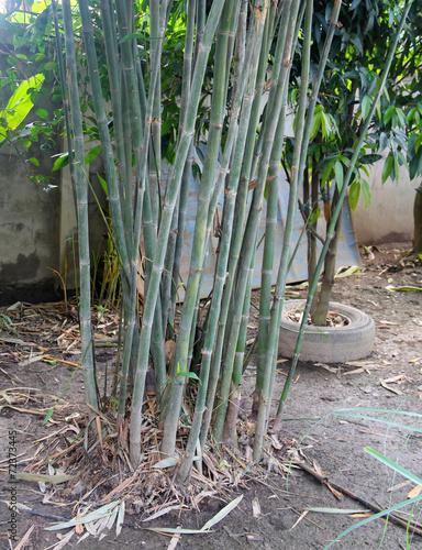 In de dag Bamboo Bamboo trunk