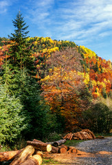 Autumn forest and logs