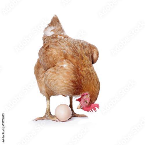 Foto op Plexiglas Kip poule avec oeuf