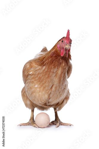 poule avec oeuf