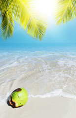Coconut on a sand