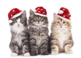 Drei Kätzchen mit Weihnachtsmützen