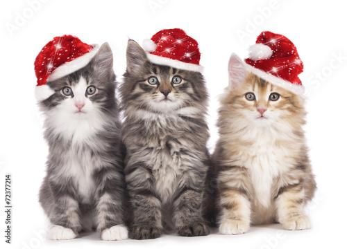 canvas print picture Drei Kätzchen mit Weihnachtsmützen