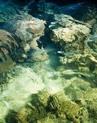 Warm Coral Sea