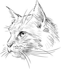 sketch of head cat